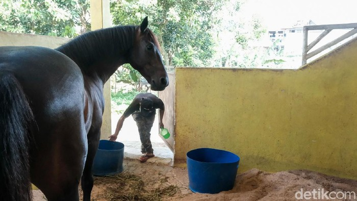 Di Pamulang Equestrian Centre, kuda-kuda dirawat dengan baik. Pamulang Equestrian Centre juga menerima penitipan kuda peliharaan untuk dirawat.