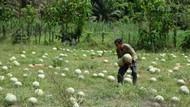 Imbas Pandemi, Petani Ini Bagikan 20 Ton Semangka Gratis