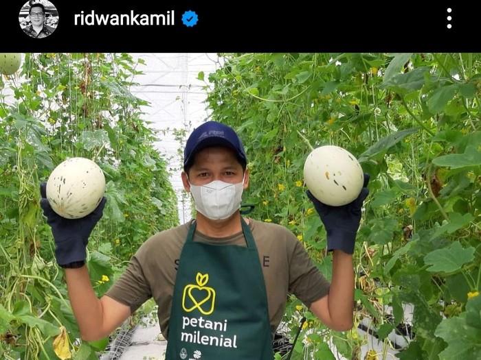 Postingan Ridwan Kamil soal petani milenial