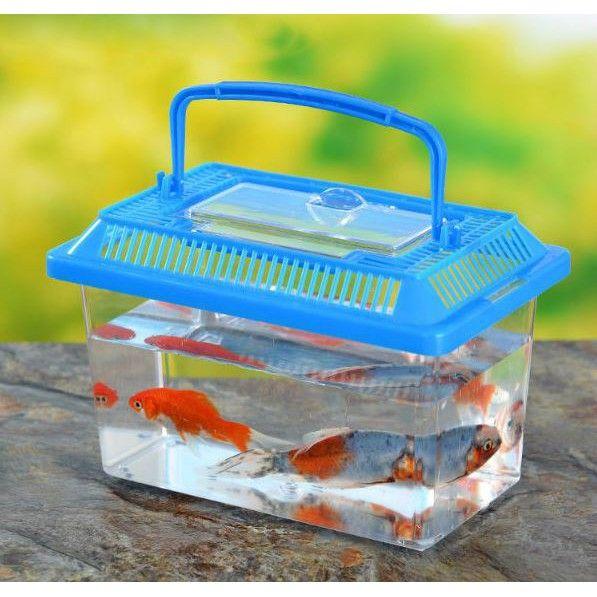 Aneh! Pria Ini Minta Bungkus Makanan Pakai Akuarium Bekas Ikan yang Amis