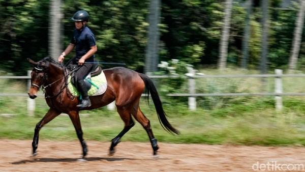 Berkuda, tidak cuma sekedar duduk, butuh teknik memegang tali kendali hingga posisi duduk yang benar.