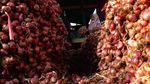 Harga Bawang Merah Turun di Tingkat Petani