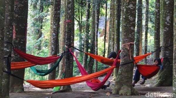 Berlokasi tak jauh dari pusat Ibu Kota Jakarta, Hutan Damar bisa menjadi destinasi pilihan kala lokasi lain sekitar puncak, Bogor penuh wisatawan.