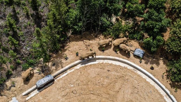 In this aerial photo released by China's Xinhua News Agency, a herd of wild Asian elephants walks in E'shan county in southwestern China's Yunnan Province, Friday, May 28, 2021. According to Chinese state media, nearby residents were evacuated as a precaution on Friday as the herd of 15 elephants have caused over 400 incidents and more than $1 million in damage since wandering out of a nature reserve area in mid-April. (Hu Chao/Xinhua via AP)