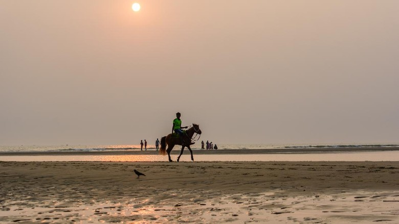 Kuda-kuda di Pantai COxs Bazar, Bangladesh