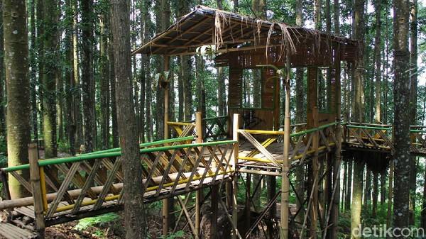 Hutan Damar yang berada di lingkup Taman Nasional Gunung Gede Pangrango ini menyuguhkan ketenangan dan kenyamanan bagi siapapun yang datang.