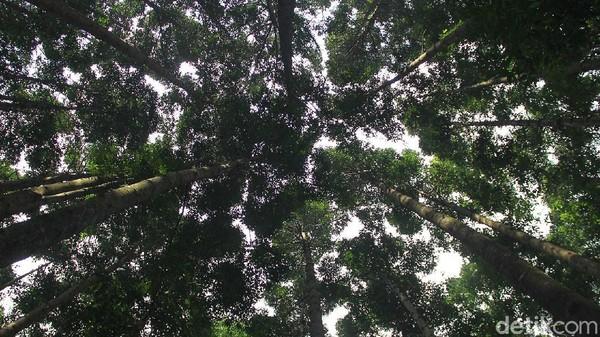 Belum banyak yang tahu, Sukabumi juga punya wisata hutan yang nggak kalah seru dari daerah lainnya.