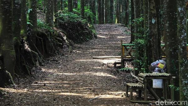 Menariknya lagi adalah tak perlu merogoh kocek dalam-dalam karena wisata ke Hutan Damar Sukabumi tergolong murah meriah.