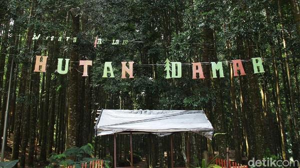 Hutan Damar namanya, lokasinya berada di kawasan Pusat Pendidikan Elang Jawa Cimungkad Sukabumi.
