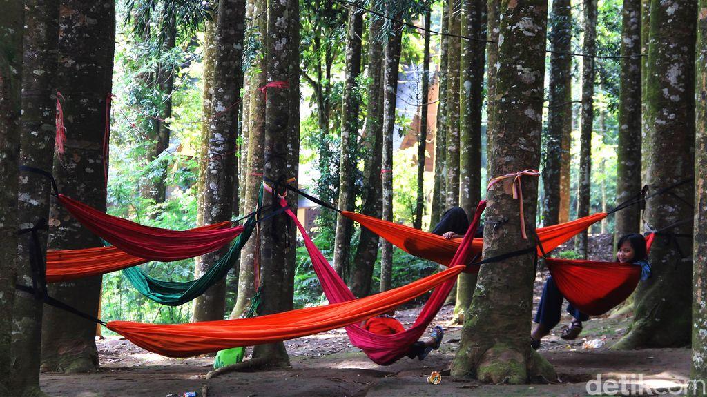 Lepas Penat Kala Pandemi di Hutan Damar Sukabumi