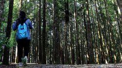 Penat di Ibu Kota? Coba Terapi Hutan di Cimungkad Sukabumi