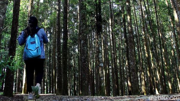 Penanaman Metode Miyawaki adalah suatu metode penanaman untuk merestorasi areal kritis yang dikembangkan oleh Profesor dari Jepang (Prof. Miyawaki) yakni konsep penanaman pohon menggunakan jarak tanam rapat yaitu jumlah penanaman antara 20.000 s.d 30.000 pohon/ha dengan tujuan agar fungsi ekosistem kawasan hutan dan tutupan lahan dapat dipulihkan dalam kurun waktu yang lebih singkat.