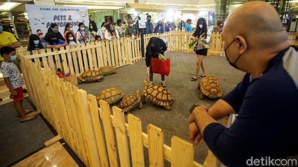 Beragam hewan dapat ditemukan di pusat perbelanjaan tersebut, salah satunya kura-kura. Ada berbagai jenis kura-kura juga dipamerkan disini seperti sulcata tortoise, leopard pardalis greeck tortoise, hingga red foot tortoise.