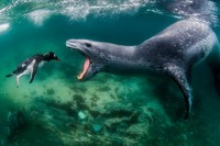 BigPicture Natural World Photography Competition 2021
