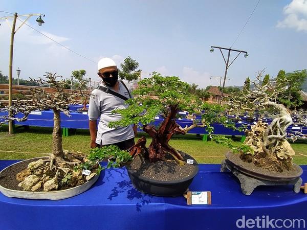 Adanya kegiatan pameran bonsai diharapkan menjadi kegiatan wisata baru di Magelang.