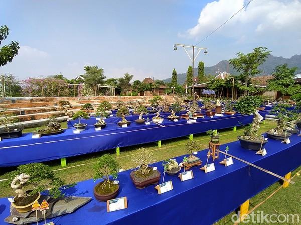 Pameran dan Kontes Bonsai Songo Doyo dilangsungkan di Balai Ekonomi Desa (Balkondes) Tuksongo Borobudur yang berlangsung sejak 30 Mei sampai 3 Juni 2021.