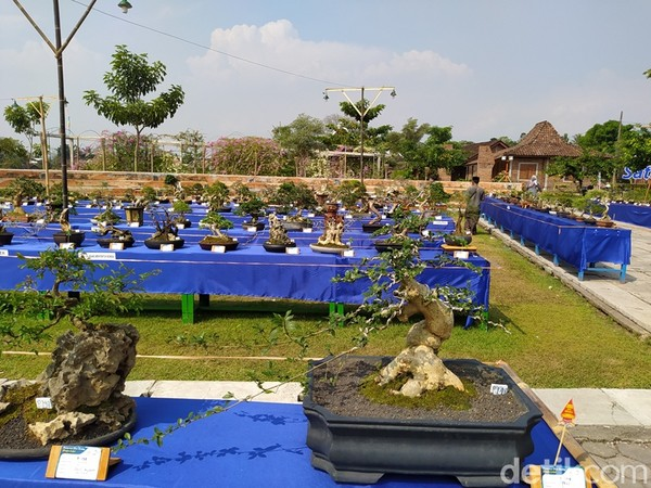 Pameran bonsai yang dilangsungkan bisa menjadi salah satu destinasi pariwisata karena lokasinya dekat dengan Candi Borobudur.