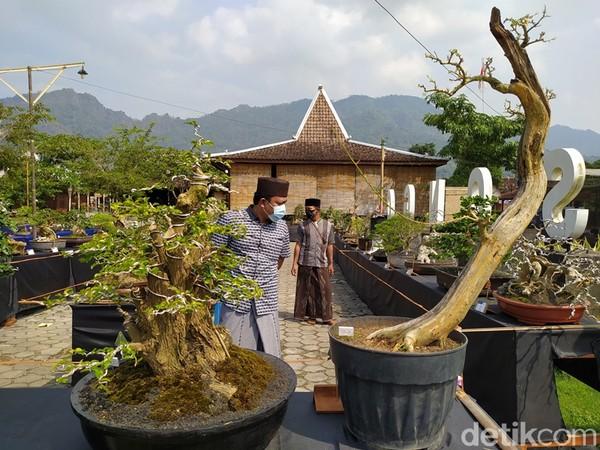 Pameran ini diprakarsai oleh Komunitas Bonsai Borobudur Oyot, Jawa Tengah.