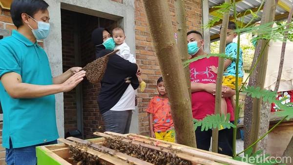 Wisatawan yang berkunjung ke sini akan mendapatkan wisata edukasi tentang lebah. Termasuk pula mengenai jenis lebah, panen madu dan setelah itu diminta untuk mencoba madu yang ada. (Eko Susanto/detikTravel)