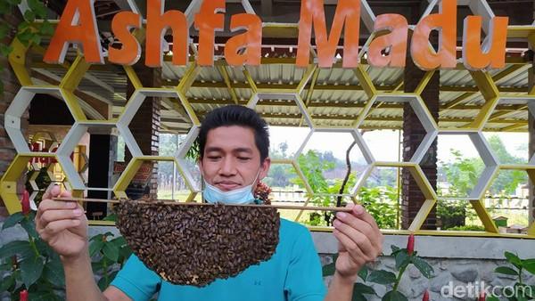Di destinasi ini, tidak ada biaya sama sekali. Pengunjung yang datang langsung mendapat edukasi tentang lebah secara cuma-cuma. Jenis-jenis lebah atau berbagai macam jenis madu, juga dijelaskan. (Eko Susanto/detikTravel)