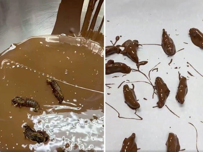 Cokelat Isi Serangga Cicada