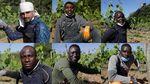Kala Kelompok Migran Gantungkan Harapan di Kebun Anggur Italia