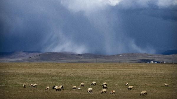 Daratan Tibet merupakan salah satu daerah yang berada di wilayah Cina. Tibet juga dikenal sebagai provinsi dengan wilayah yang paling tinggi di bumi.