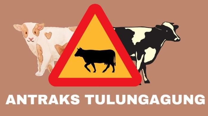 Ada kasus antraks di Tulungagung. Pemkab Tulungagung melakukan pembatasan lalu lintas perdagangan sapi di lokasi yang ditemukan kasus antraks.