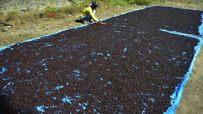 Pekerja menjemur biji kopi di Kecamatan Pallangga, Kabupaten Gowa, Sulawesi Selatan, Sabtu (5/6/2021). Biji kopi jenis arabika yang dipanen dari dataran tinggi Malino tersebut dijual dengan harga Rp80 ribu hingga Rp100 ribu per kilogram dalam keadaan kering dan dipasarkan di sejumlah daerah, diantaranya Kendari, Bau-Bau, Mamuju dan Gorontalo. ANTARA FOTO/Abriawan Abhe/rwa.