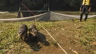 Momen Pelepasliaran Berang-berang di Sungai Ciliwung