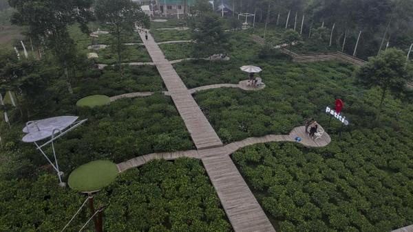 Wisata kebun teh yang menawarkan pemandangan hamparan pohon teh dan lokasi tempat swa foto di tengah kebun teh itu menjadi daya tarik wisatawan saat akhir pekan di Kabupaten Batang.