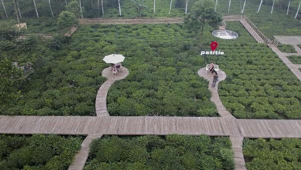 Foto udara hamparan taman wisata kebun teh Patitie di Blado, Kabupaten Batang, Jawa Tengah, Sabtu (5/6/2021).