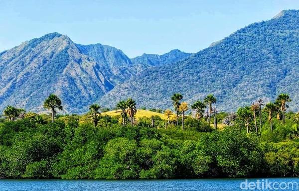 Vegetasi di kawasan ini juga beragam dan masih alami. Di beberapa bagian garis pantai juga terdapat hutan mangrove, serta bermacam faunanya. Dengan latar belakang gunung Baluran yang tampak membiru dari kejauhan.