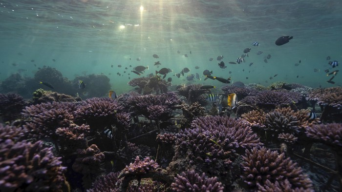 Fish swim at a coral reef garden in Nusa Dua, Bali, Indonesia, May 28, 2021. Picture taken May 28, 2021. REUTERS/Nyimas Laula