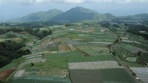 Pemandangan areal ladang di kawasan lereng Gunung Sumbing Desa Sukomakmur, Kajoran, Magelang, Jawa Tengah, Senin (7/6/2021).