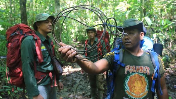 Demi mengembankan tugas negara menjaga hutan Leuser, salah satu paru-paru dunia agar aman dari ancaman kegiatan ilegal seperti pemburuan, perambahan dan pembalakan liar mereka tak mengenal rasa takut dan lelah.