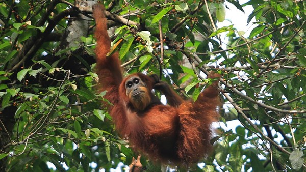 Jagawana adalah bagian tidak terpisahkan dari KEL, karena KEL merupakan wilayah penting dengan berbagai keanekaragaman hayati seperti empat satwa kunci sumatera yaitu harimau sumatera, badak sumatera, gajah sumatera dan orang utan sumatera.