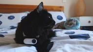 Pria Selipkan Kamera Kecil di Kalung Kucingnya, Ungkap Rahasia Si Mpus!