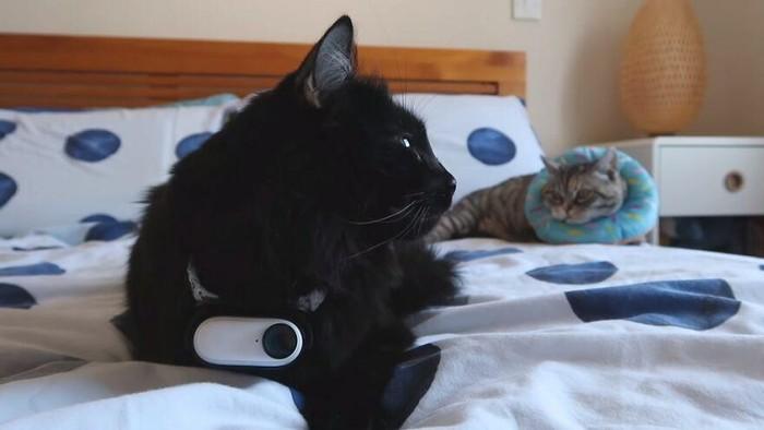 Seekor kucing punya rahasia, katanya. Namun kata-kata ini dibuktikan oleh hasil video dari kamera bluetooth kecil yang disematkan seorang pria di kalung sang kucing selama 24 jam.  Vlogger Half-Asleep Chris menyematkan video untuk memantau sang kucing Ralph. Dari kalung ini, digamblangkan kehidupan dari perspektif Ralph sebagaimana dikutip dari Bored Panda.