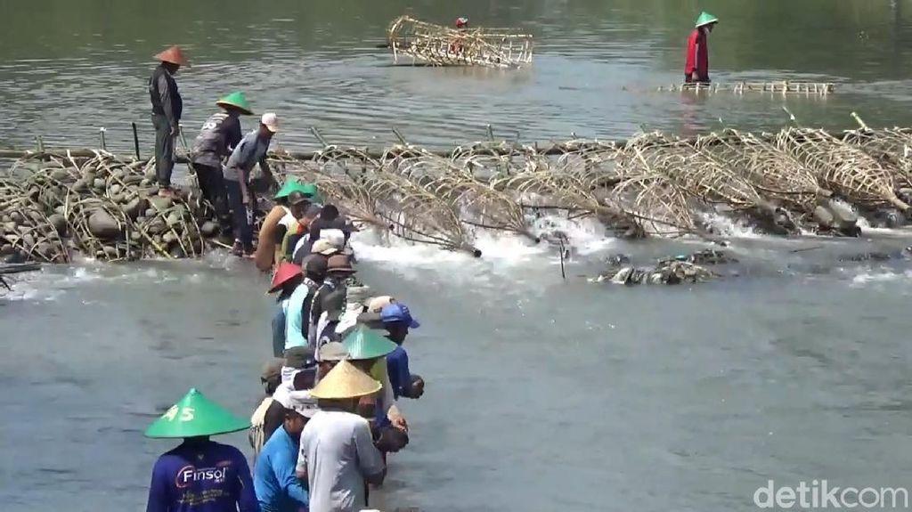 Jelang Kemarau, Ratusan Warga Kuningan Gotong Royong Membendung Sungai
