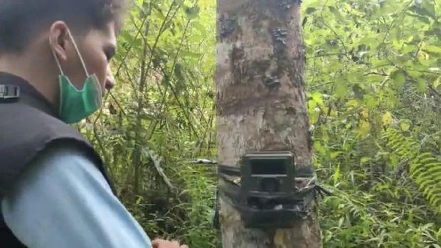 BKSDA membongkar camera trap (dok BKSDA Agam)
