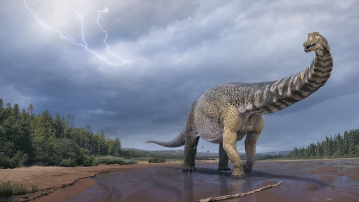 Dinosaurus Australotitan cooperensis