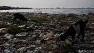 Tantangan Mengelola Sampah: Tingkat Kepedulian Masyarakat Masih Rendah
