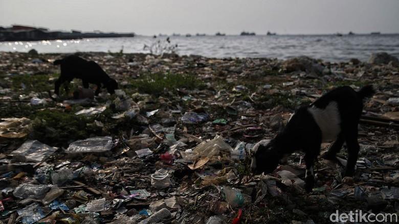 Pekerja Dinas Lingkungan Hidup membersihkan Pantai Cilincing di Jakarta, Selasa (8/6/2021). Pada 8 Juni diperingati sebagai Hari Laut Sedunia, peringatan ini dilakukan sebagai bentuk perhatian akan pentingnya ekosistem laut yang selama ini menjadi sumber daya yang dibutuhkan manusia.