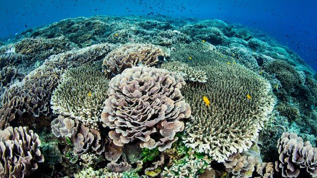 Hari Laut Sedunia jadi momentum pentingnya laut untuk ekosistem dan sumber daya manusia