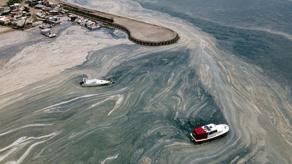 Wabah Ingus Laut Ancam Ekosistem Laut Turki