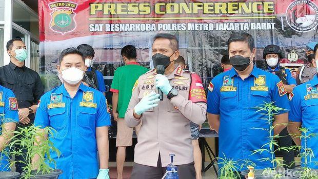 Koferensi pers pengungkapan kasus kebun ganja di Brebes (Karin/detikcom)