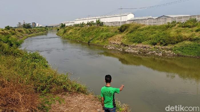 Buaya yang tampak di Sungai Sadar, Dusun Toyorono, Desa Sukoanyar, Kecamatan Ngoro, Mojokerto merupakan buaya muara. Buaya itu keluar dari habitat aslinya di Sungai Brantas karena faktor lingkungan.