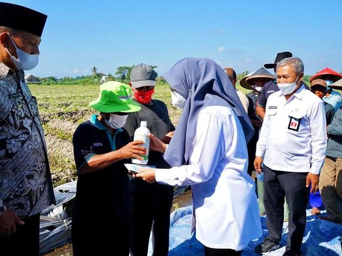 Mempermudah pelayanan bagi para petani, Dinas Pertanian dan Pangan Kabupaten Banyuwangi meluncurkan Pelayanan Smart Konsultasi Pertanian Online atau disingkat Pas Kontan.