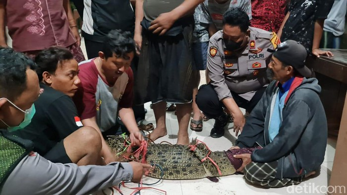 Sayembara menangkap buaya di Sungai Sadar Mojokerto membuahkan hasil. Warga menangkap buaya muara tersebut hanya menggunakan sarung.